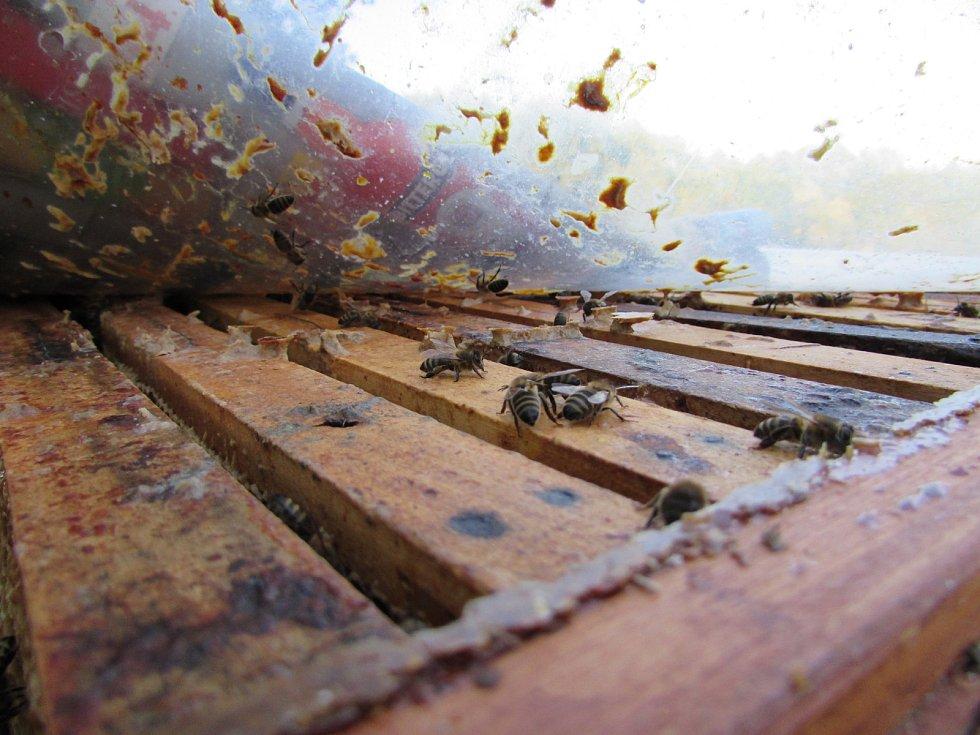 Mladý včelař Kamil Valenta chová včely v Držovicích a na Lhotsku u Úštěka.