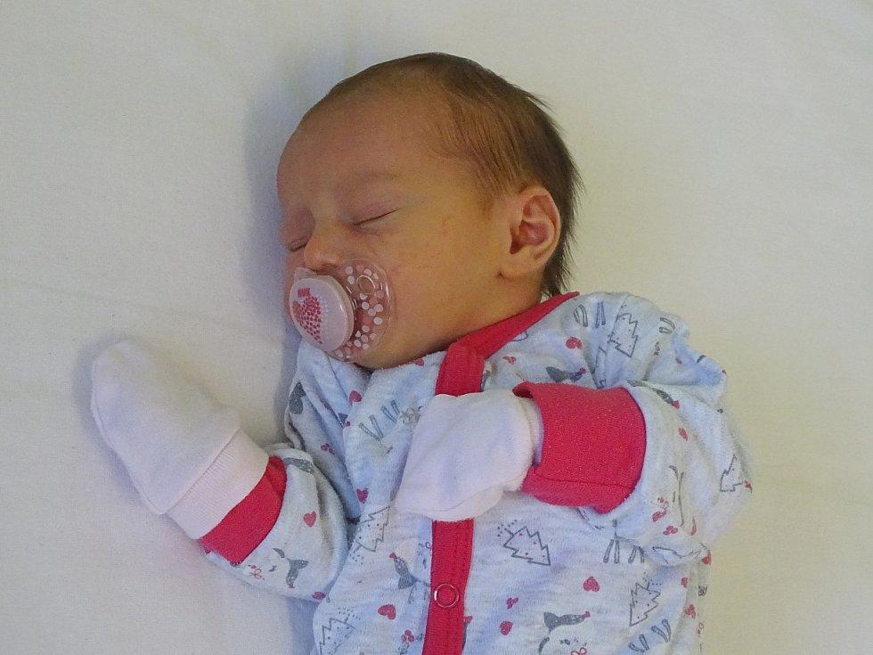 Dorotea Novotná se narodila Lucii a Tomáši Novotným z Lovosic 29.1.2019 v 3.13 hodin v Litoměřicích (50 cm a 2,83 kg).