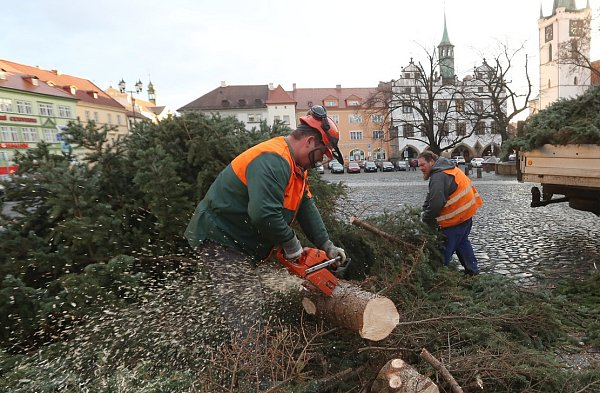 Likvidace vánočního stromu vLitoměřicích.
