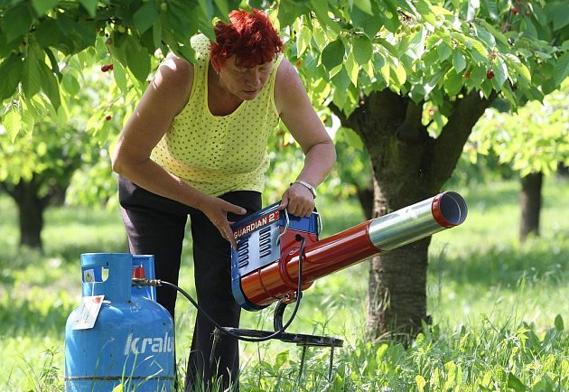 """PLYNOVÉ DĚLO. K plašení špačků používají nyní v Klapém a okolí mimo jiné plynové dělo. """"Na rány si ale brzy zvyknou. Už nepomáhá ani to,"""" říká Otakar Šašek, ředitel klapského zemědělského družstva."""