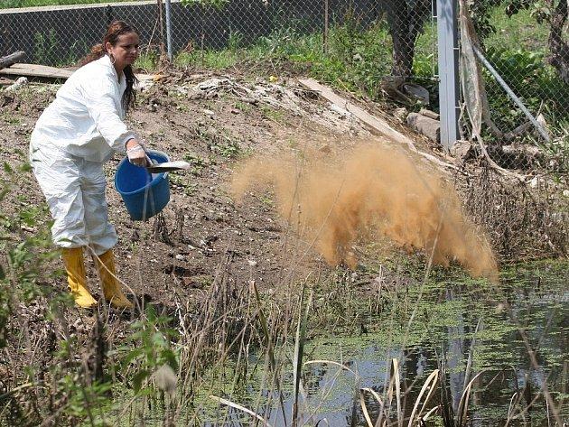 CHEMIE. Pracovníci dezinsekční a deratizační firmy likvidují larvy i vylíhnuté komáry v Bohušovicích. V terénu nyní budou každý den, pokud to počasí dovolí.