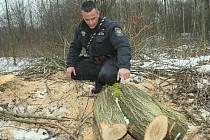 SMUTNÝ POHLED.  Během jedné ze společných hlídek státních policistů a třebenického městského strážníka nalezli její členové na konci ledna letošního roku hned několik míst, kde došlo ke krádežím dřeva.