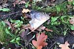 Ryby z jezírka v litoměřickém parku Václava Havla skončily bez hlav