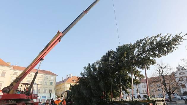 Na Mírové náměstí byl přivezen vánoční strom.