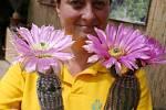 Výstava kaktusů v zámeckém skleníku v Libochovicích