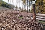 Cesty pod vrchem Sedlo lemovaly na konci října obrovské deponie vytěženého dřeva. Na místech, kde stál ještě na jaře les jsou nyní holiny.