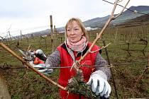 Marie Jarolímková vyrazila do vinic