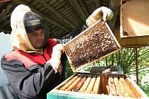 Včelaři pečují o včelstva a kontrolují, zda mají kam ukládat med.