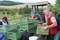 Většina velkých ovocnářů na Litoměřicku, kteří jsou vybaveni technologií na prodloužení uskladnění ovoce, mají zásobu jablek z loňské sezony až do konce dubna.