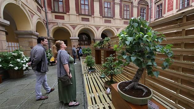 Tradiční letní výstava bonsají bude letos kratší. Začala v pátek a končí v pondělí. Tradiční výstavu navštíví stovky obdivovatelů.