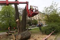V ulici Na Valech byly pokáceny dva mohutné stromy