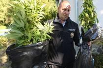 Vzrostlé konopí objevili policisté při preventivní akci v jedné z chalupářských osad na Lovosicku. Rostliny nyní poputují na odbornou expertízu kvůli zjištění množství THC.