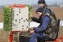 V zemi jsou už první rané brambory, semena cukrovky, zeleniny a hrášku