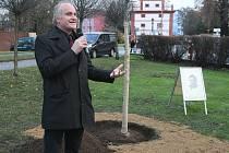 V Roudnici n.L. zasadili lípu na počest Václava Havla