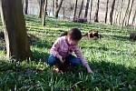 Na Litoměřicku už roste medvědí česnek