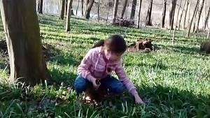 V lesích na Litoměřicku roste medvědí česnek