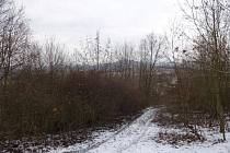 V tomto týdnu probíhá na úpatí severního svahu Radobýlu kácení náletových dřevin.