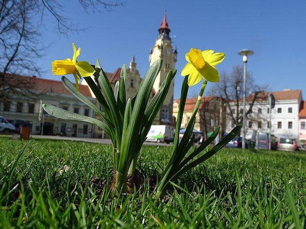 Václavské náměstí v Lovosicích rozkvetlo