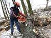 Hodonín čeká kácení stromů. Kvůli jejich stavu i opravám