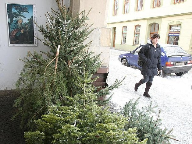 Vánoční stromky, které lidé po Třech králích odstrojují, končí u košů a popelnic.