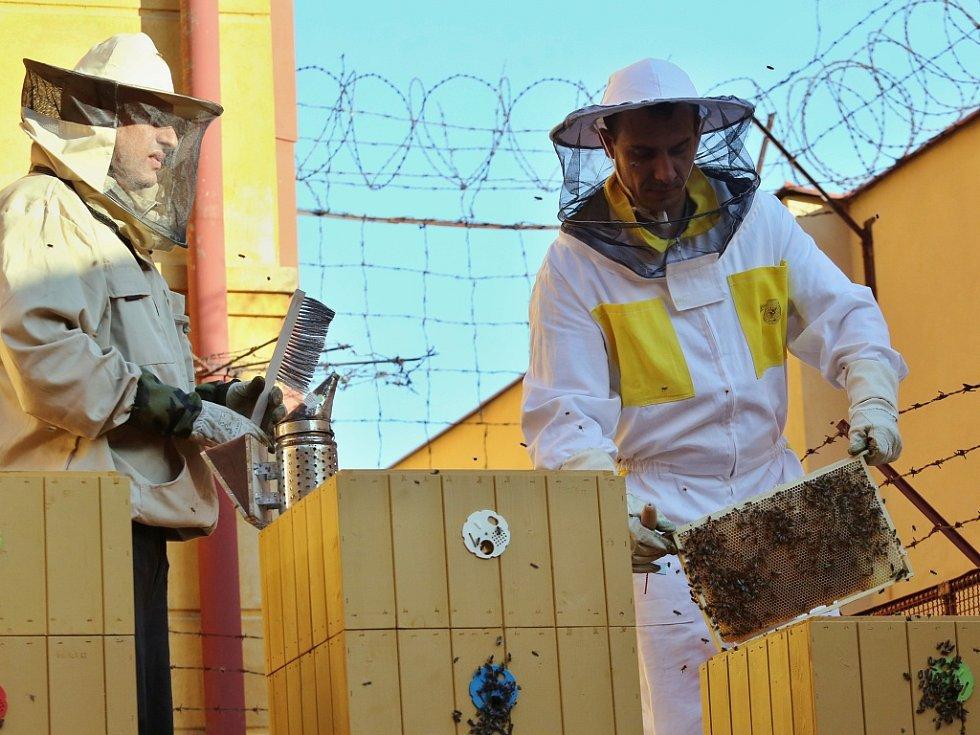 Stáčení medu ve Vazební věznici Litoměřice