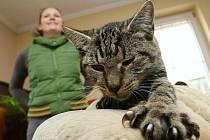 Azyl pro opuštěné kočky Lucky v Černivi, ilustrační foto.