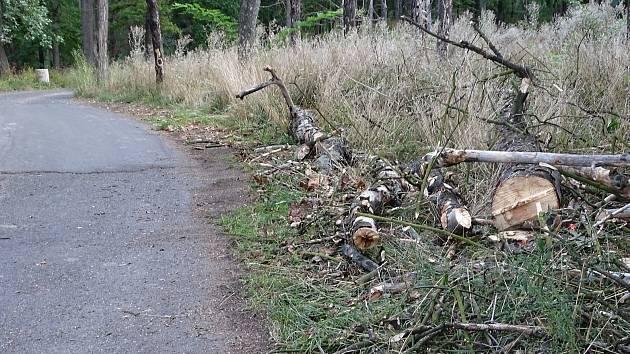 Na Mostné hoře začalo kácení uschlých stromů