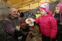 Drůbež bude na Zimní výstavě letos chybět. Organizátoři  však program obohatí bohatší přehlídkou králíků a morčat.