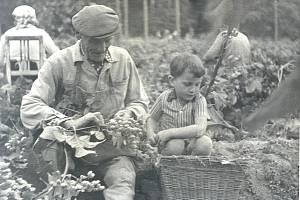 Žně a zemědělství na Litoměřicku