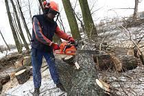Kácení stromů v lovosickém lesoparku Osmička.