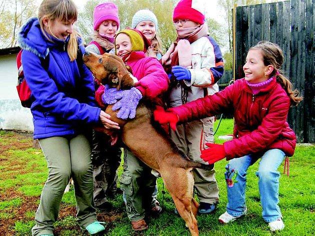V rámci Dne prevence se žáci 4. ročníku litoměřické Základní školy Na Velech podívali také do psího útulku.