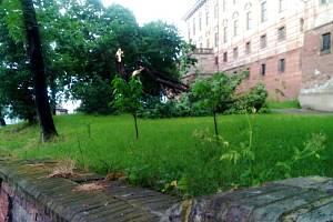 Poškozený strom v areálu roudnického zámku
