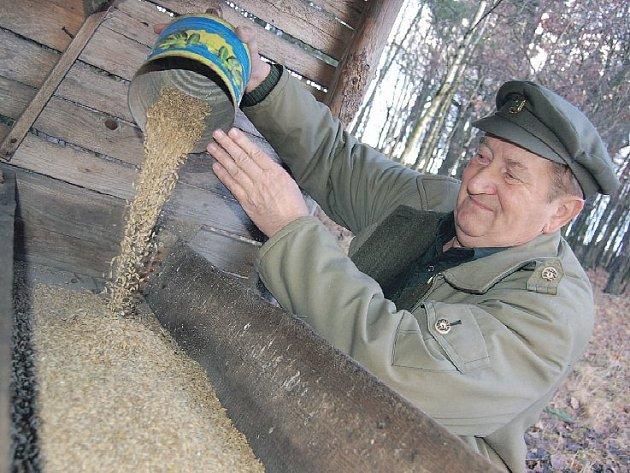 """OBILÍ. Do krmelců zavážejí myslivci na Litoměřicku čerstvé krmivo minimálně jednou týdně. """"Z jadrných krmiv je nejvhodnější oves nebo ječmen. Dále je vhodné luční seno, jablka, mrkev a další zelenina,"""" radí Adolf Rolínek."""