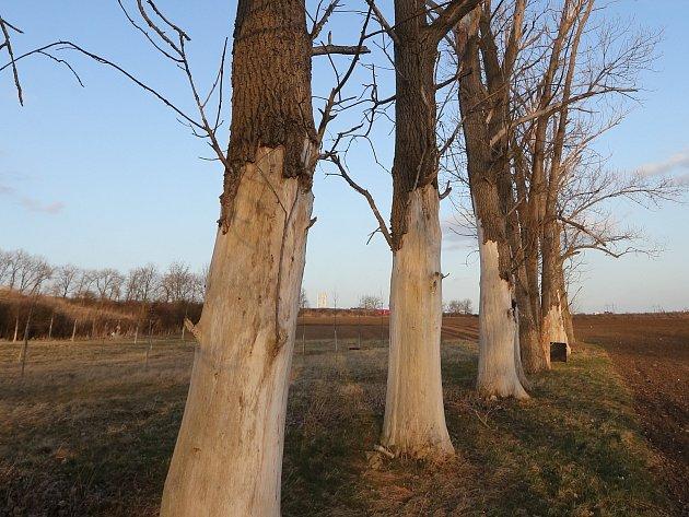 Stromy v blízkosti skládky zbělaly, uschly a odpadla jim kůra. Zřejmě to způsobilo zasolení podzemních vod.