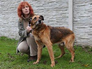 Stav týraného psa se v řepnickém útulku výrazně zlepšil