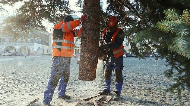 V Litoměřicích již je na náměstí vánoční strom