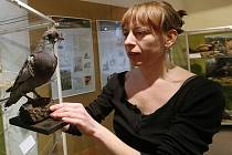 VÝSTAVU O FENOMÉNU holubí pošty doplňuje také zoologická část s exponáty z muzeí v Ústí nad Labem a v Hradci Králové.