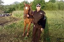 Litoměřičtí strážníci odchytávali koně.