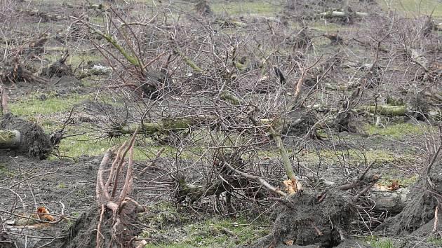 U Klapého zlikvidovali sad. Půdu nechají několik let odpočinout a potom jej obnoví.