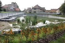 Rybník ve vsi, ilustrační foto.