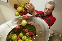 Vůně jablečné šťávy plní v těchto dnech moštárnu ve Starém Týně na Litoměřicku
