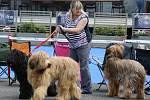 Soutěžní výstava psů Nord Bohemia Canis
