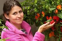 Autorkou aranžmá výstavy pálivých papriček je Pavlína Švecová, která se po Zahradě Čech chystá na přípravu expozic do Olomouce a Lysé nad Labem.