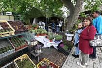 Levandulová zahrada v obci Klapý má den otevřených dveří.