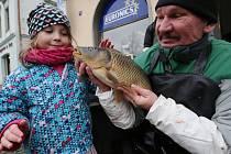 Předvánoční prodej ryb v Litoměřicích