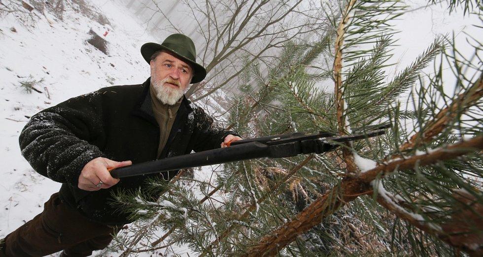 Lesníci chrání malé jehličnaté porosty proti krádežím na vánoční stromky. Kulturu znehodnotí ostříháním části větví a dále používají postřikové látky, které v teple zapáchají