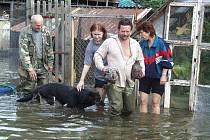 Povodeň 2002 - 11.-13. srpen, Litoměřice