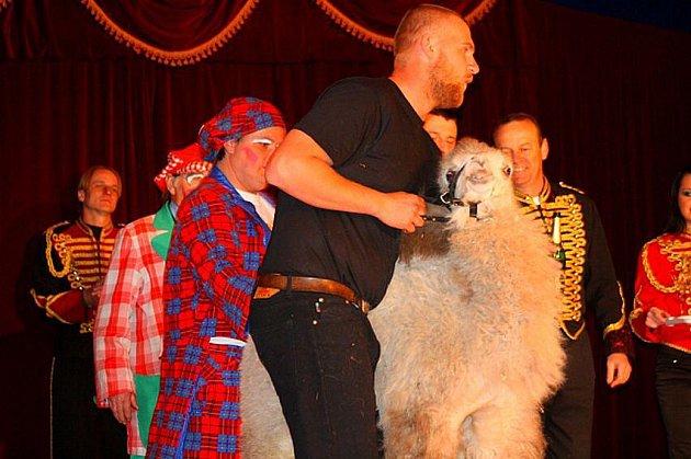 MLÁDĚ VELBLOUDA dvouhrbého, nový přírůstek cirkusu Praga, dostalo své jméno podle dosud poslední štace cirkusu – Roudnice nad Labem. Měsíční mládě velblouda tady během víkendového představení pokřtil starosta města Josef Bakeš.