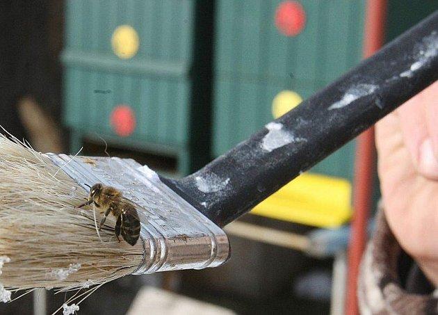 Sluníčko s teplotou přes deset stupňů nad nulou lákalo včely k letošnímu prvnímu proletu a včelaře, aby zjistili, jak včelstva přezimovala.