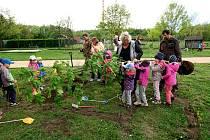 Děti z MŠ Proboštov sází stromy.